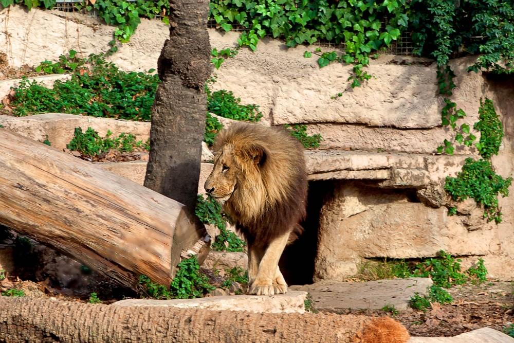 Царь (фото: Gotarta)