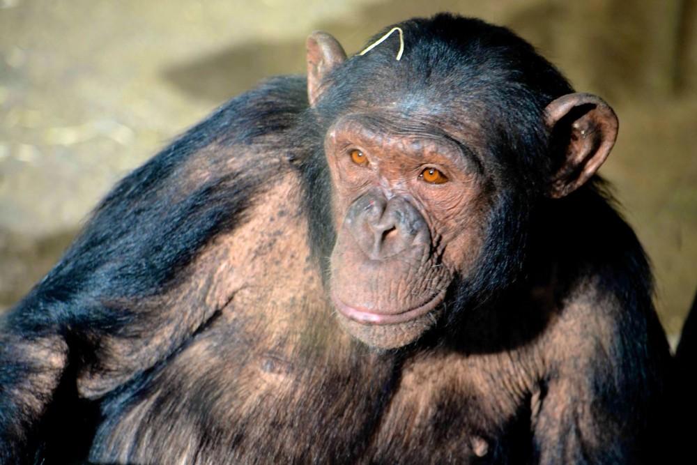 Добрая обезьяна (фото: Fernando Two Two)