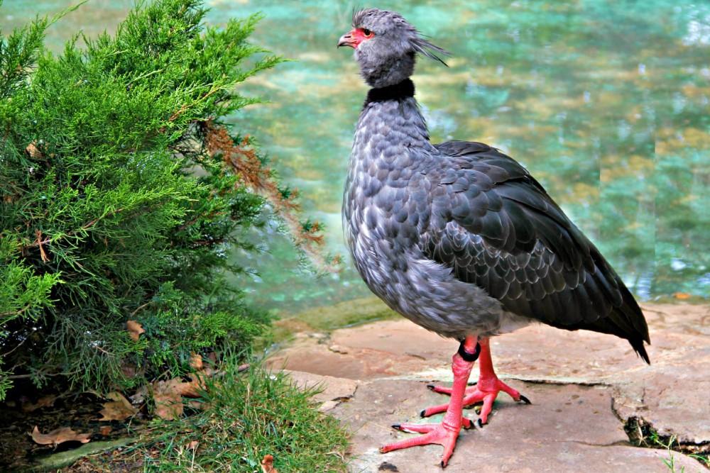 Важная птичка (фото: MIQUEL BLASCO)