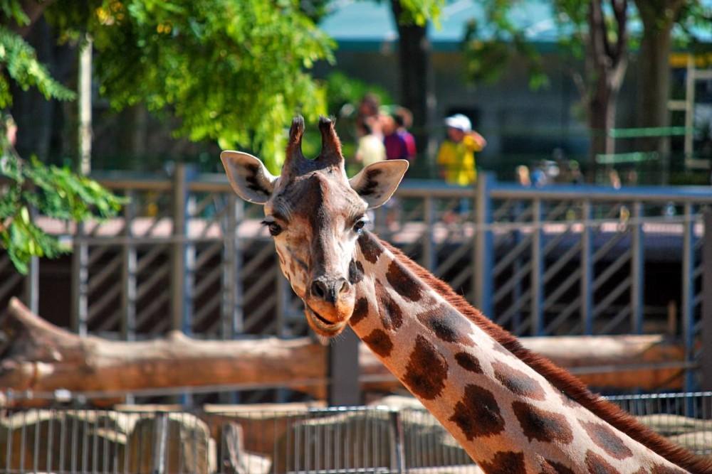 Жираф (фото: Kikko Design)