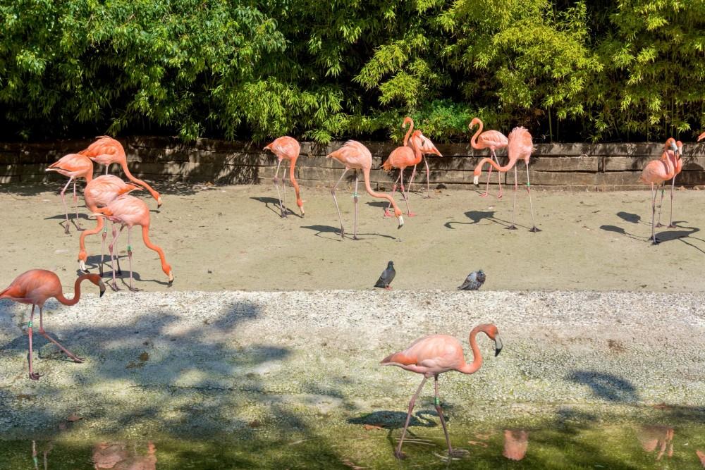 Фламинго (фото: Bart de Grood)
