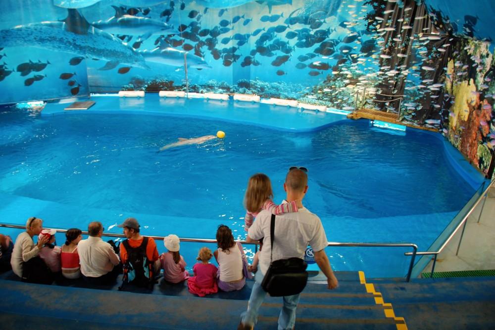 Шоу дельфинов (фото: Lilaland)