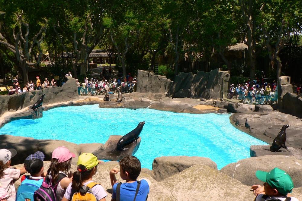 Шоу морских львов (фото: Paul Chapman)
