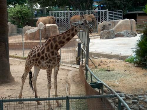 Зоопарк (Parc Zoologic)