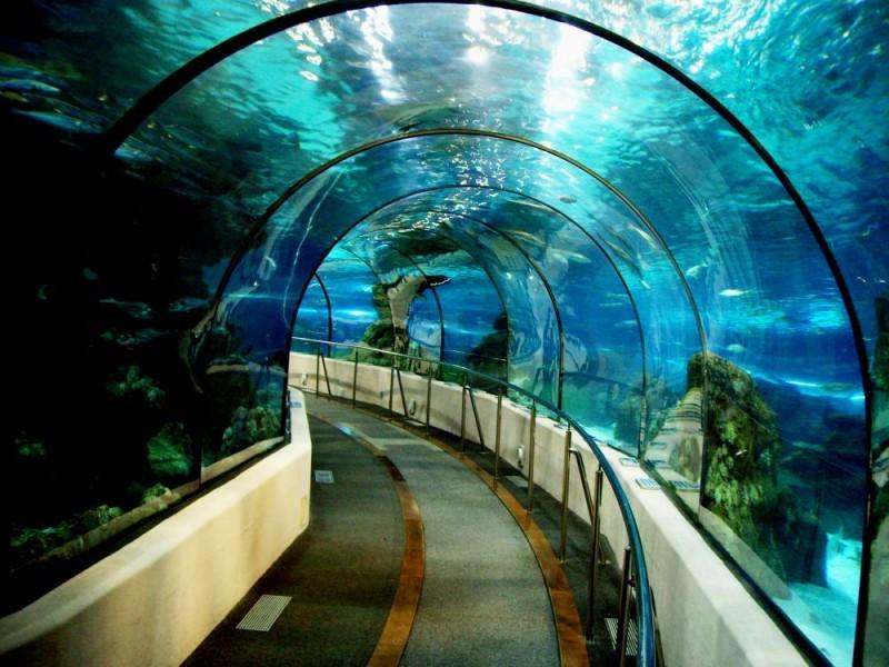 В аквариуме (L'Aquàrium de Barcelona)