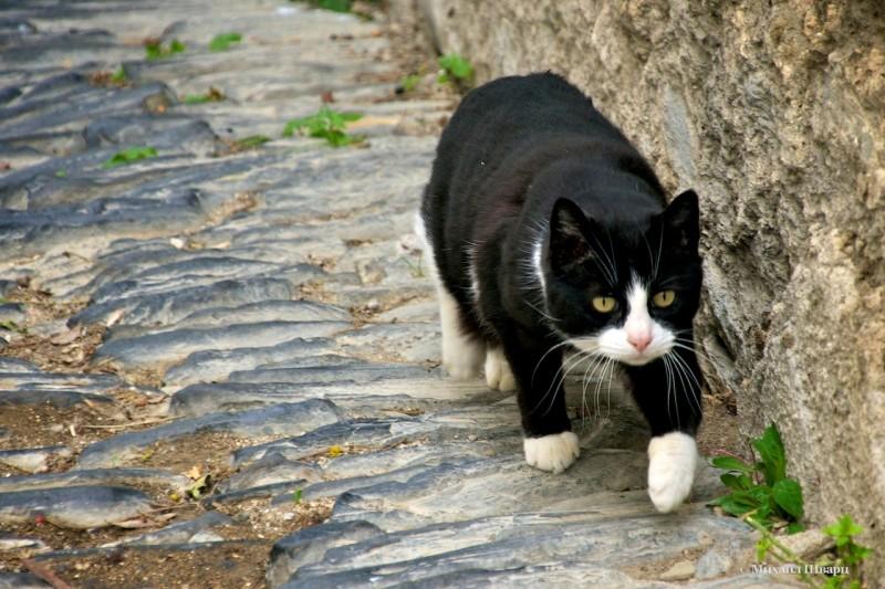 Коты везде!