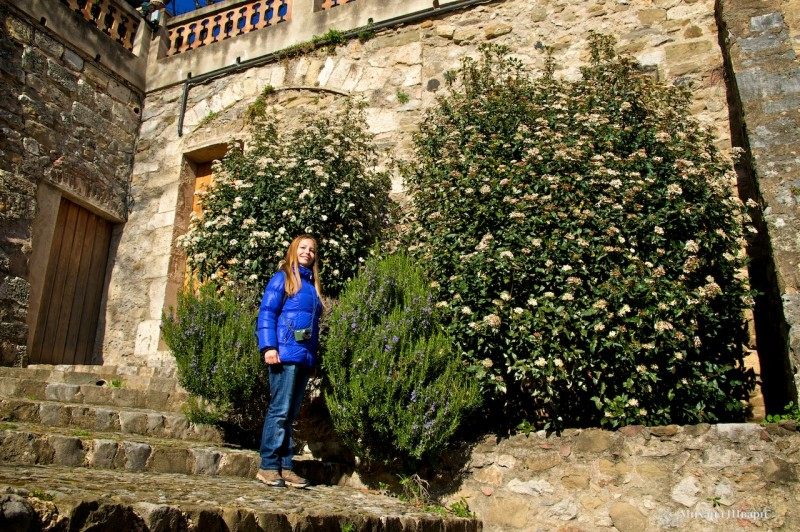 Красивые цветочки около крепостной стены