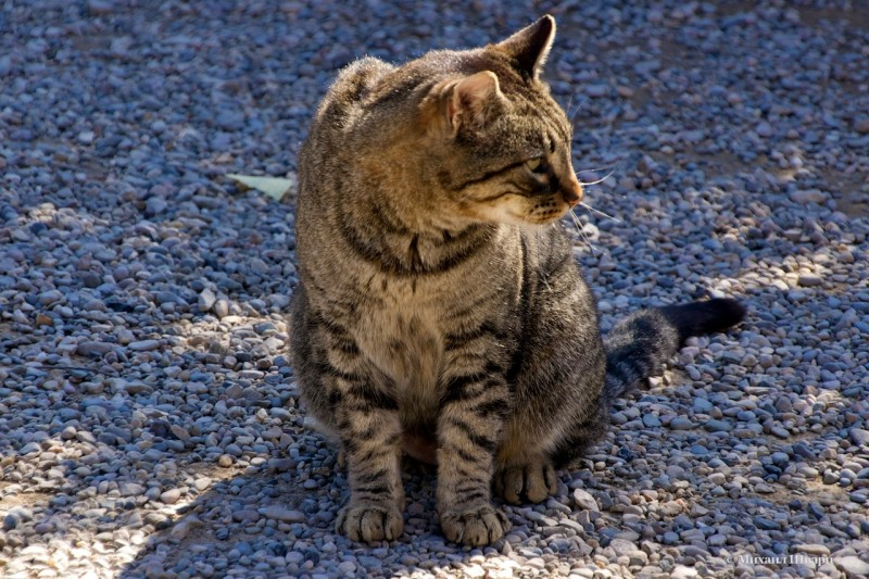 По дороге нам встречались котики