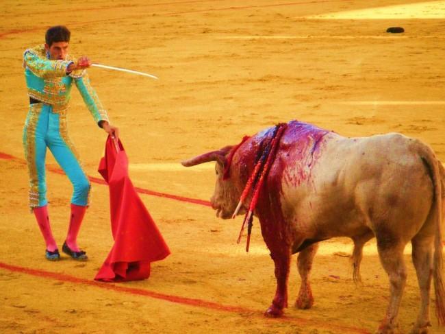 Коррида – бой быков