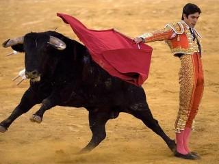 Коррида — бой быков