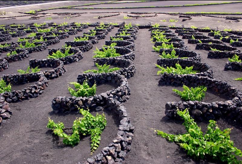 Виноградники Ла Херия