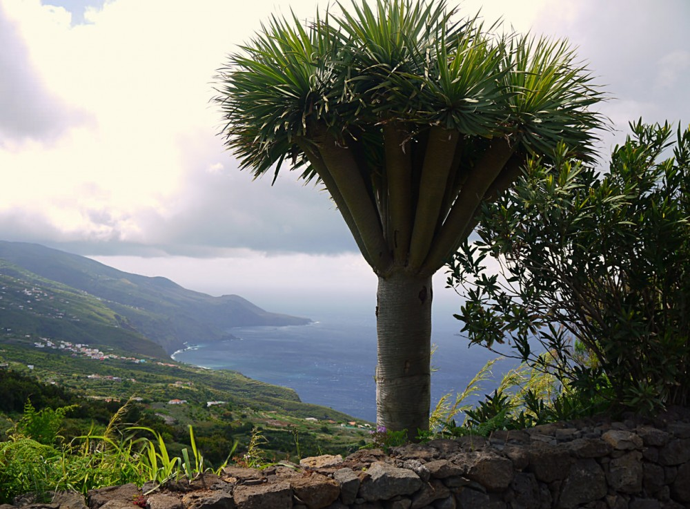 Остров Ла Пальма