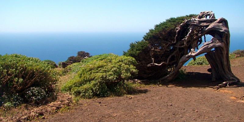 Деревья прижатые к земле