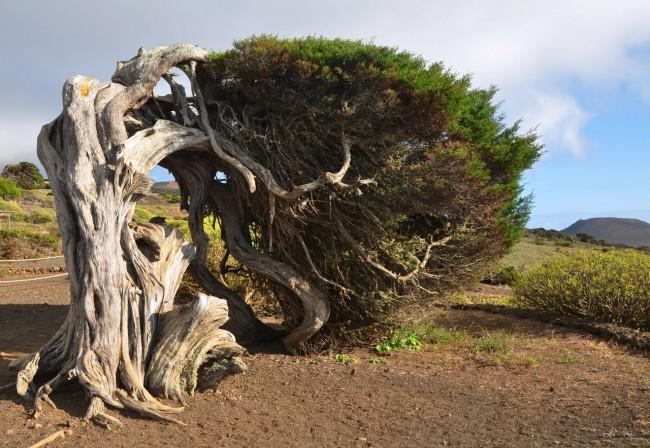Можжевеловый лес (El Sabinar)