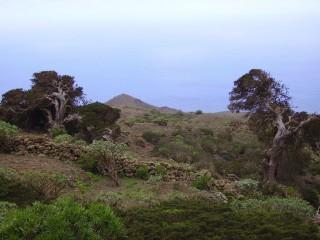 Можжевеловый лес Эль-Сабинар. Витые кусты острова Эль Йерро
