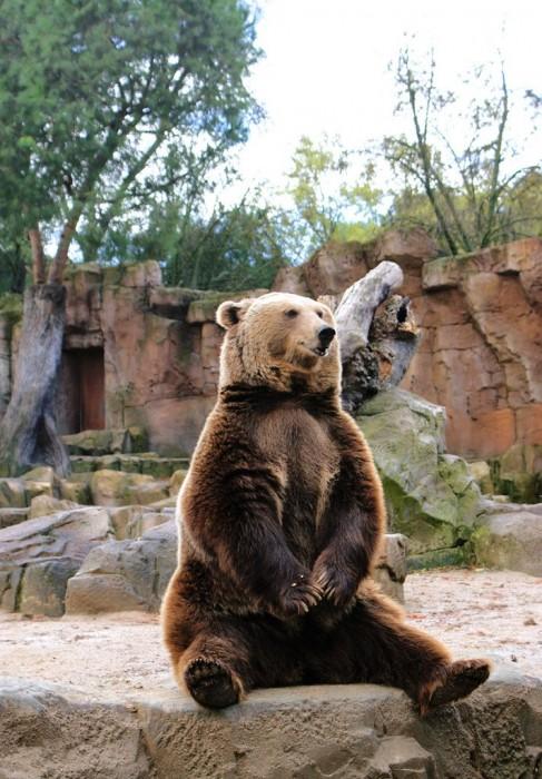 Зоопарк и аквариум (Zoo Aquarium de Madrid)