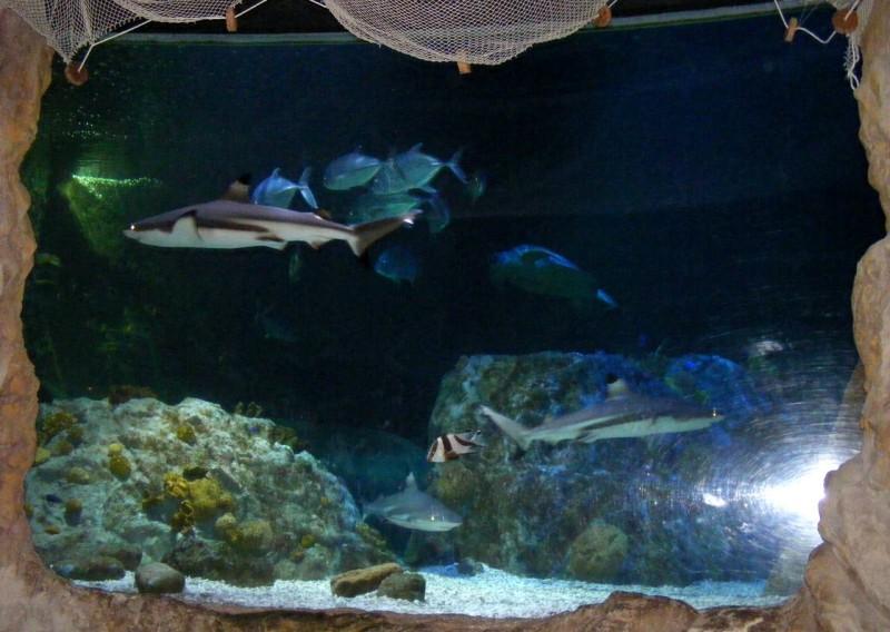 Аквариум Морская Жизнь (Sea Life)