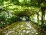 Ботанический сад Ла Консепсион 13
