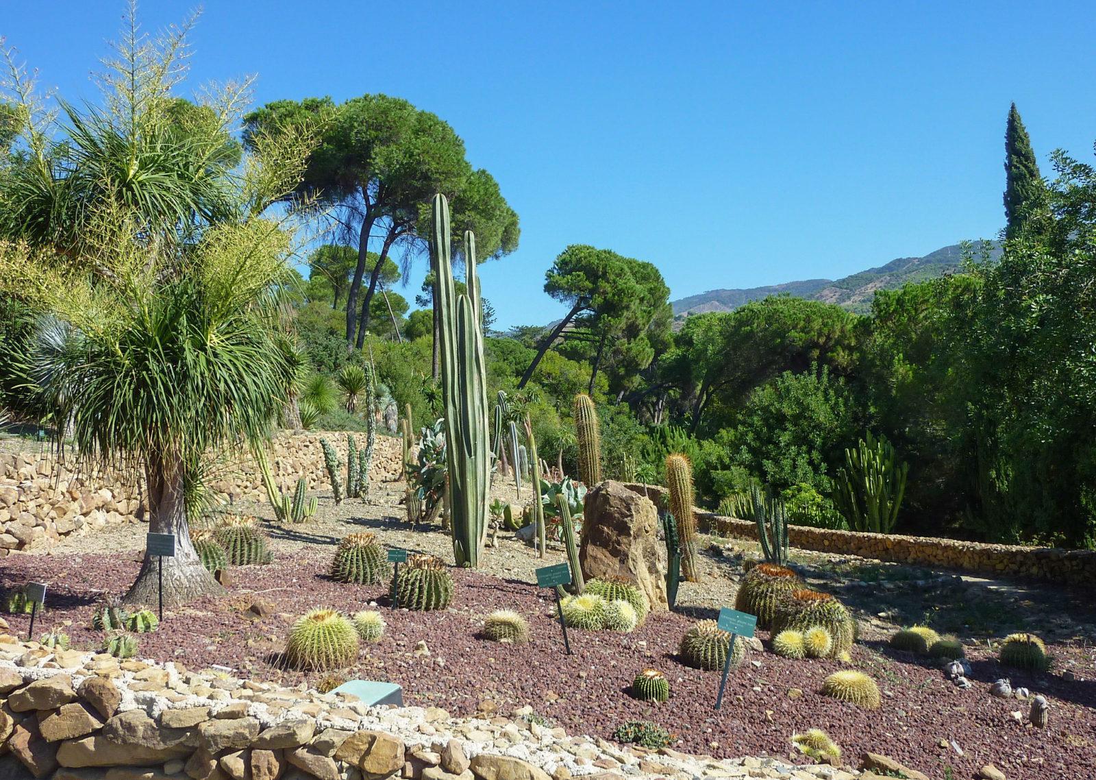Зона кактусов, фото Christopher West