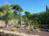 Ботанический сад Ла Консепсион 3