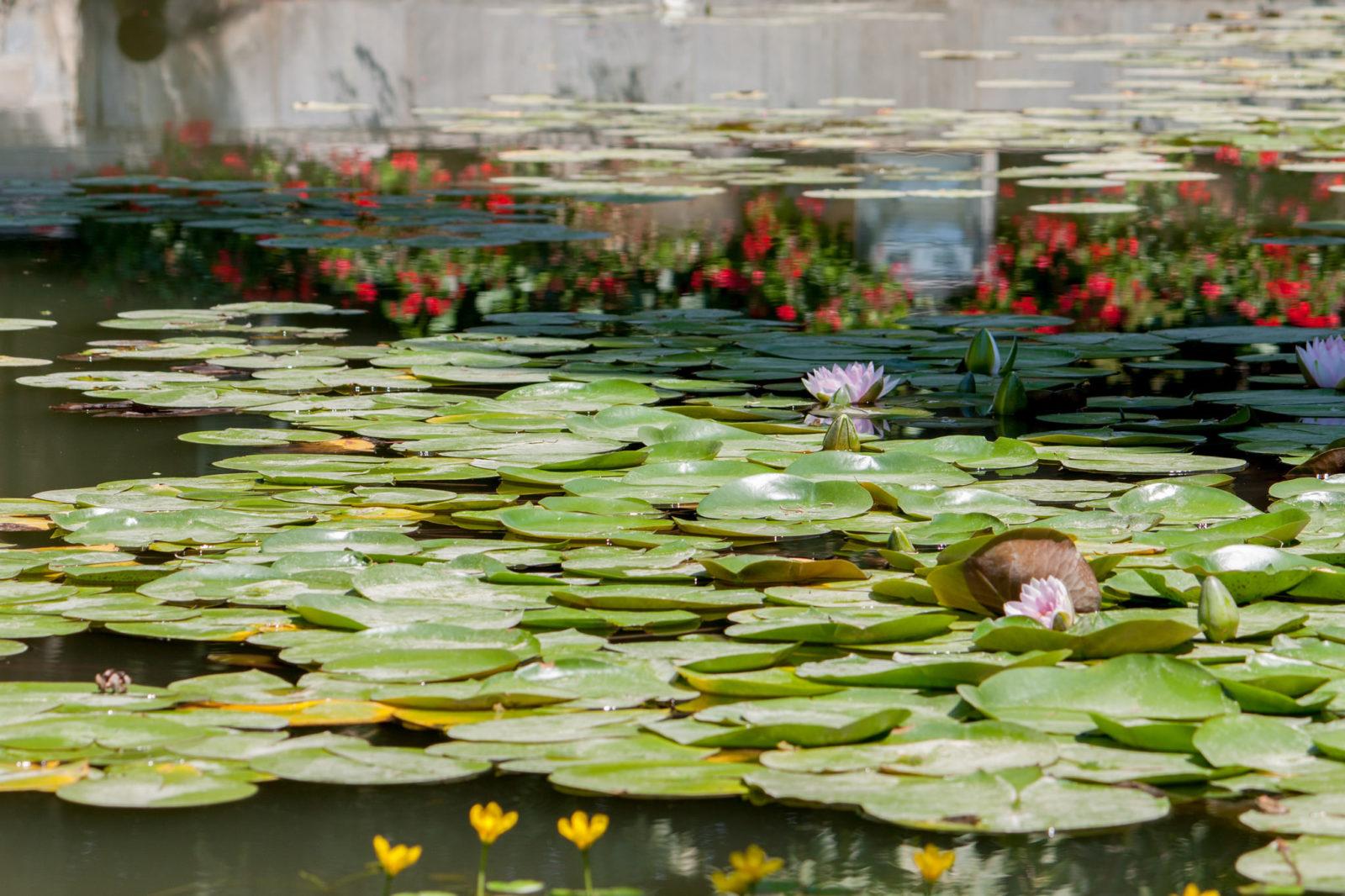 Романтичный пруд, фото Paolo Trabattoni