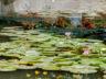 Ботанический сад Ла Консепсион 9