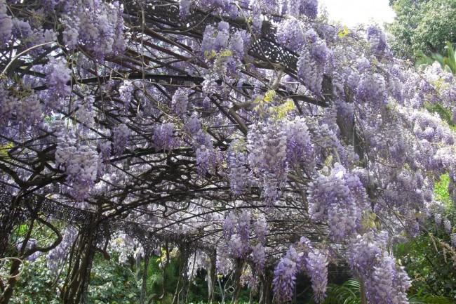 Ботанический сад Ла Консепсион