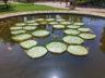 Ботанический сад Ла Консепсион 11
