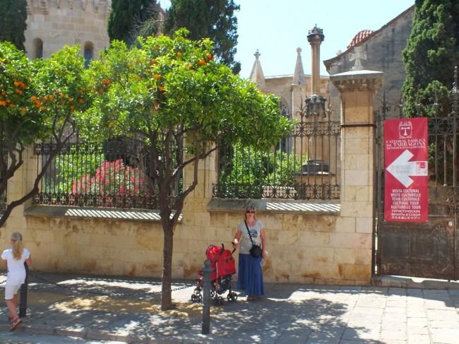 Мандарины в Таррагоне