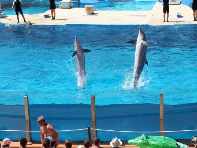 Шоу дельфинов в Аквополисе