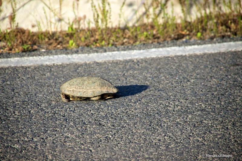 Черепаха!