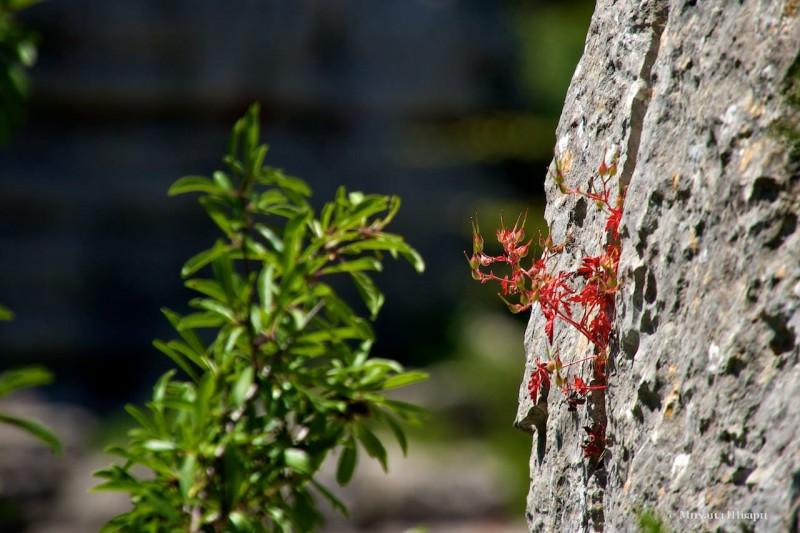 Растение пробилась сквозь скалу.