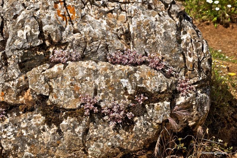 Цветы растут прямо из камня