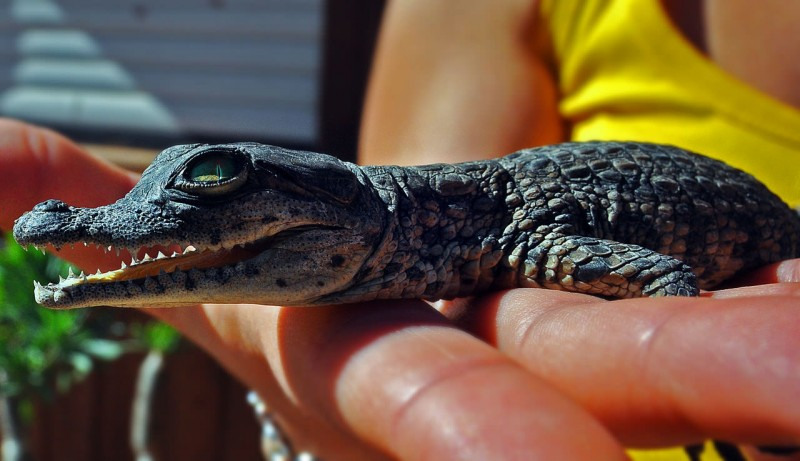 Парк крокодилов (Cocodrilo Park)