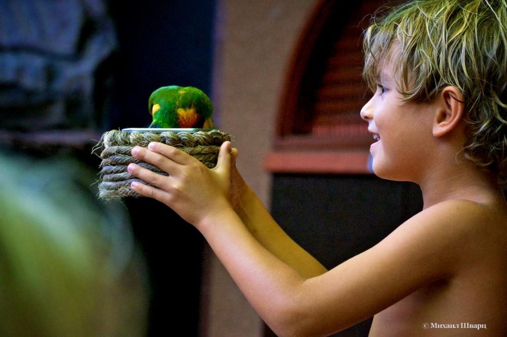 Мальчик кормит попугаев