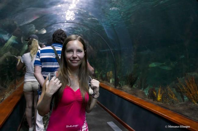 Туннель сквозь аквариум