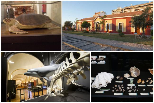 Музей естественной истории (Museo de Historia Natural)