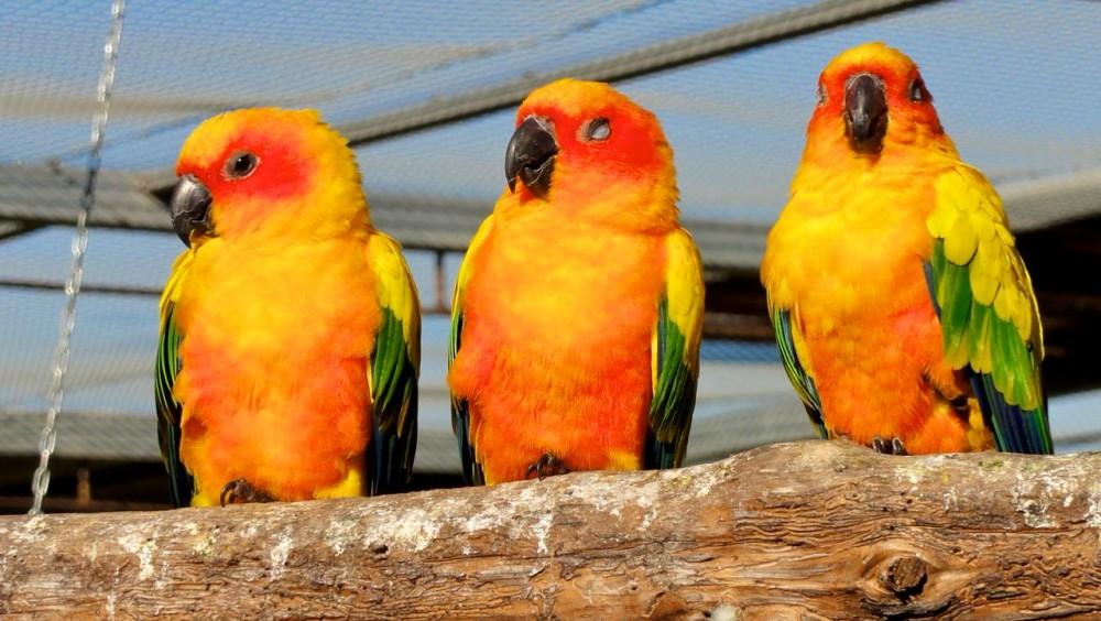Сад экзотических птиц в окрестностях Benicarló
