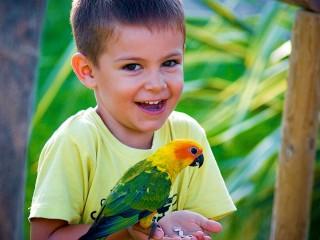 Сад попугаев в Беникарло