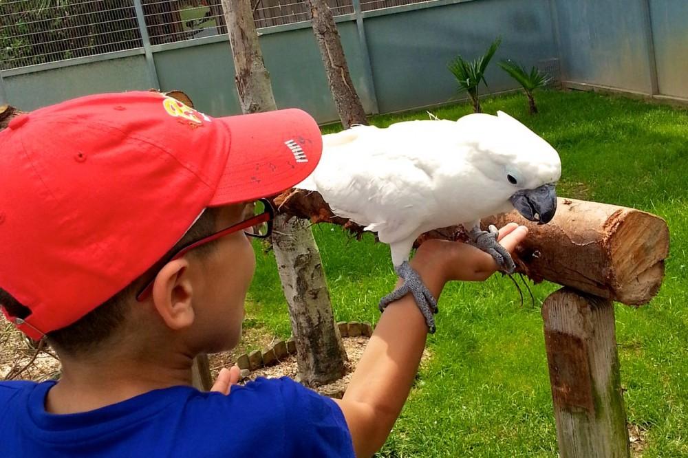 Большой попугай (фото: Jordi, Mons i Víctor)