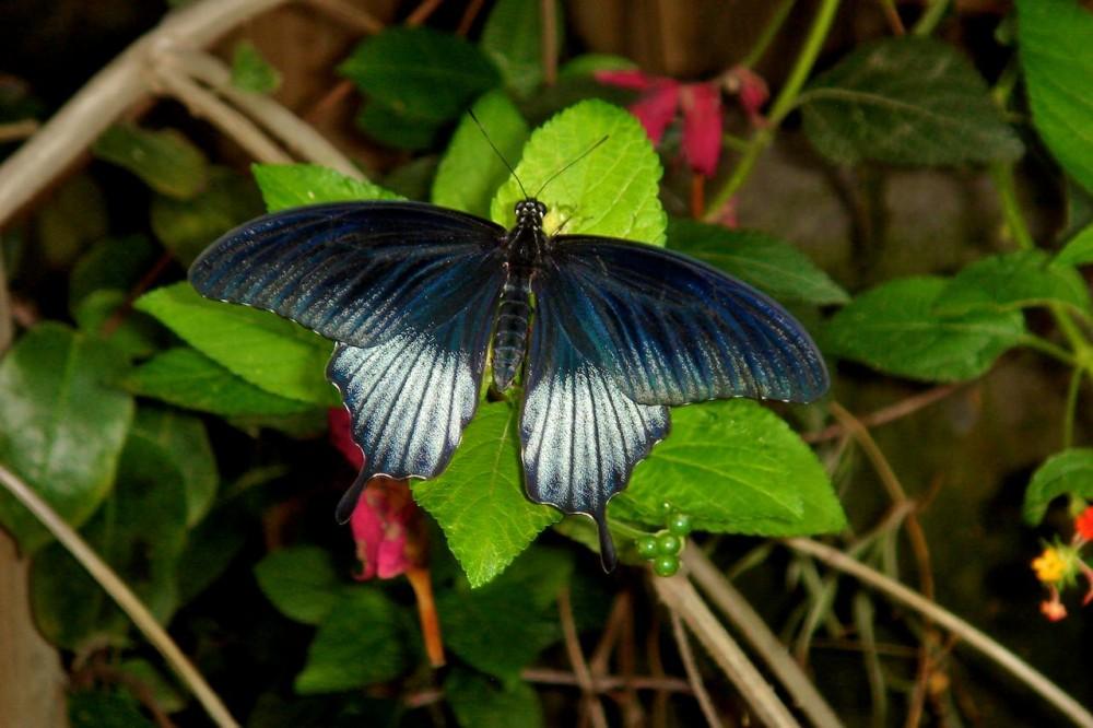 Одна из бабочек (фото: JokiMon)