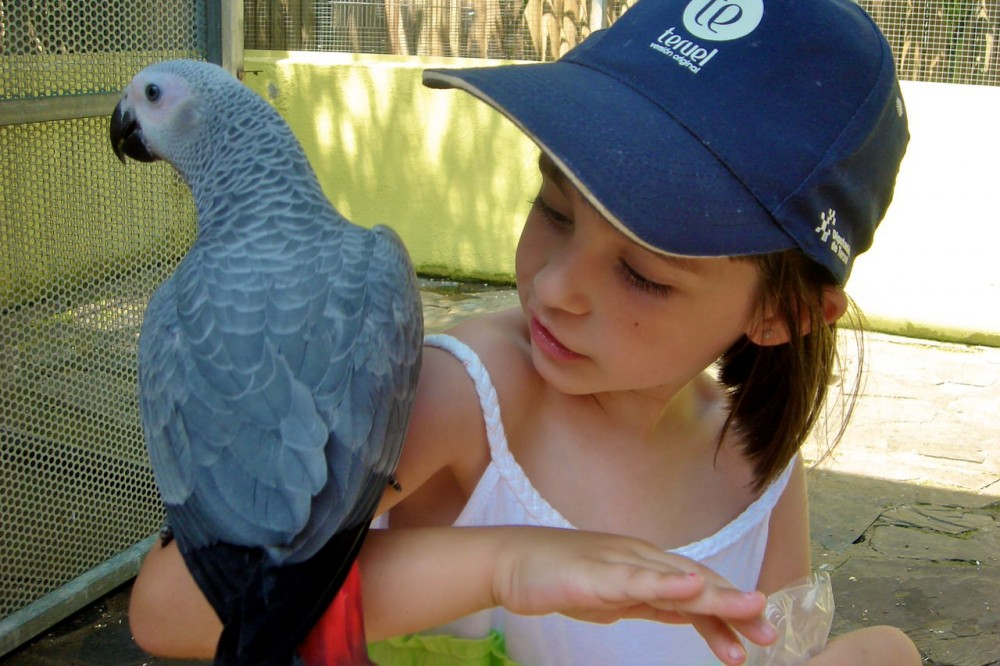 Жако – серый попугай (фото: JokiMon)