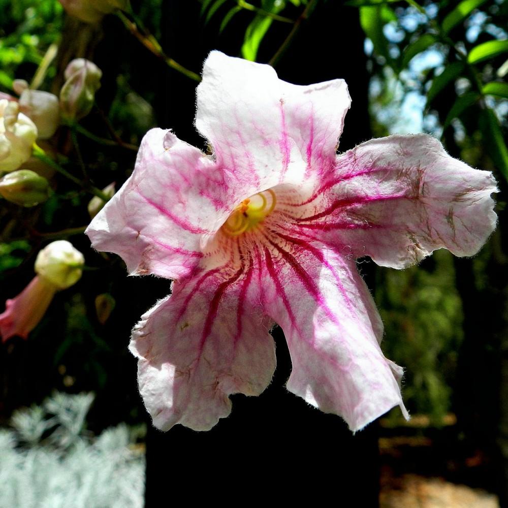 Ботанический сад на Гран Канарии (фото: Daniel)