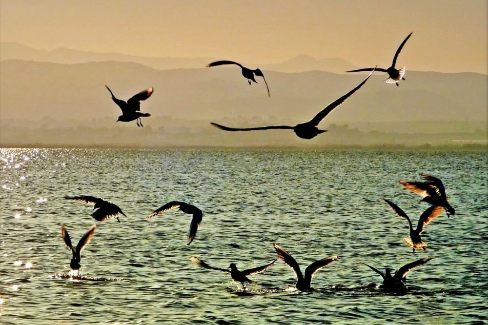 Птичьи танцы (фото: .Bambo.)