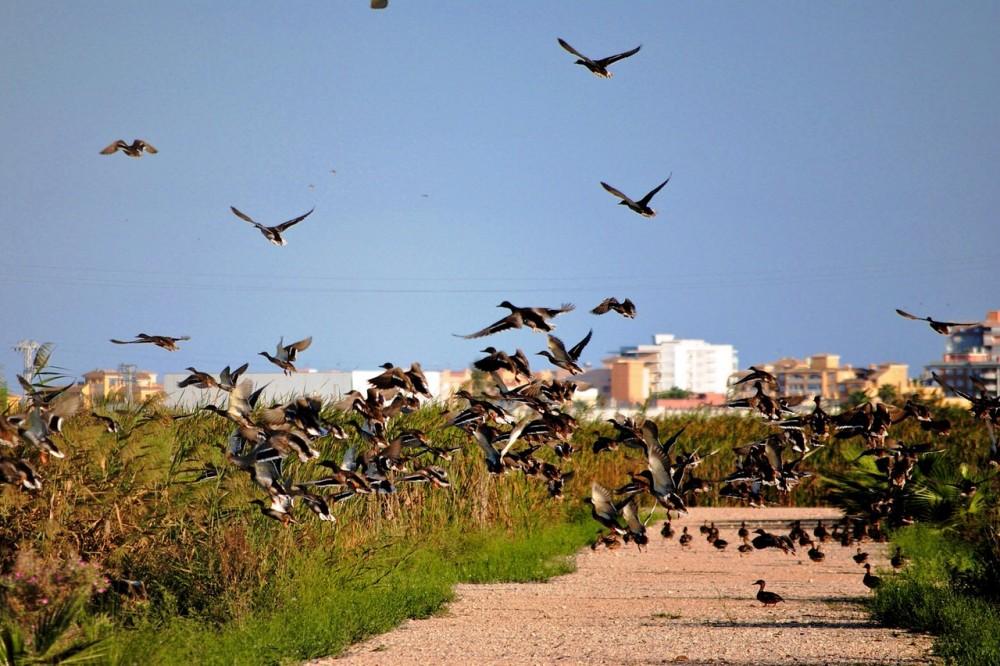 Птицы в природном парке Альбуфера (фото: Marcela Escandell)