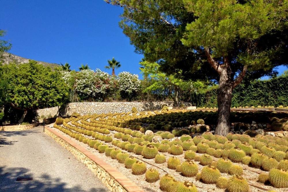 Поле кактусов (фото: Manuel Frischknecht)