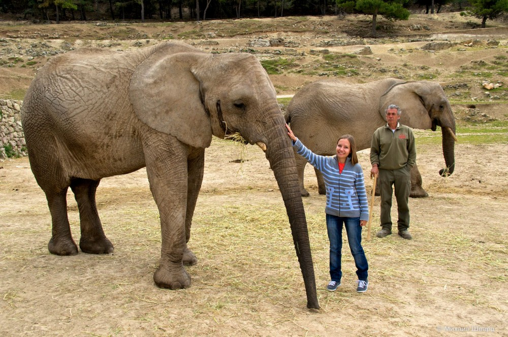 Гладим африканских слоников