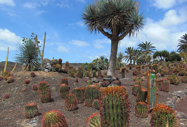 Сад Кактусов в  Оазис Парке