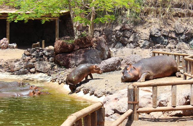 Зоопарк Оазис Парка
