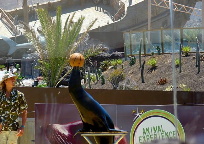 Зона общения с животными (Animal Experience Park)